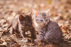 (有靈感) Tags: 貓 pets cute cats kitten pentax pentaxlife pentaxart k1 smc