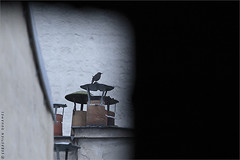 IMG161104_053_©_S.D-S.I.P_FR_JPG Compression 700x467 (Sébastien Duhamel) Tags: eu europe european europa fra fr france french francia paris agency banqued'images footagestock bancodeimagenes presse press prensa information news informacion photojournaliste photojournalist fotoperiodista photographe photographer fotografo photographefrançais frenchphotographer fotografofrancés journalistephoto reporterphoto fotoreportero copyright projetoiseaux birdsproject proyectopájaro oiseau bird pájaro oiseaud'europe birdofeurope lasaveseneuropa pájaroeneuropa oiseaudeparis birdofparis lasavesenparis pájaroenparis merlenoir blackbird turdusmerula