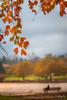 Lovely time 美好時光 (T.ye) Tags: leaf bokeh orange picture landscape people contrast todd ye fall autumn