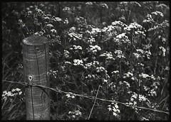 7 (fawcetownsley) Tags: blackandwhite bw film stand minolta 110 developer agfa 16mm 25asa fixer rokkor 1to100 minolta16 homemadesoup copex devx pg110b 22mmrokkor