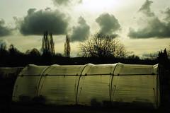 (ben ot) Tags: clouds greenhouse nuages serre jardinsouvriers jardinsfamilliaux