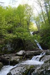 Dark Hollow Falls 099 (Nathan_Arrington) Tags: nature landscape virginia scenic waterfalls va bigmeadows skylinedrive shenandoahnationalpark darkhollowfalls