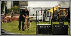 P1200327  Carshalton carnival and Fair..14.06.14 (Tadie88) Tags: display fairground flames rides dogtraining carshaltoncarnivalandfair140614