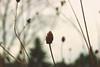 No.3 (Ronak Momeni) Tags: flower fall sarah landscape october meadow ann warmtone loreth