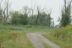 DSC06454 (Ton Smilde) Tags: oostvaardersplassen naturereserveinthenetherlands