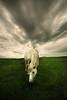 Horse (Jonathan Kos-Read) Tags: china horse delete10 clouds delete9 delete5 delete2 delete6 delete7 save3 delete8 delete3 delete delete4 save save2 mongolia choice grassland steppe 14mm