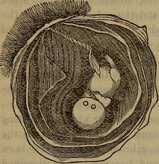 Anglų lietuvių žodynas. Žodis ovule reiškia n  bot. sėklapradis 2 biol. kiaušialąstė lietuviškai.