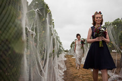 """Emma coming through the vines at Jack Rabbit Vinyard Bellarine Peninsula - milesstandishphotography.com • <a style=""""font-size:0.8em;"""" href=""""http://www.flickr.com/photos/21623077@N04/14771205924/"""" target=""""_blank"""">View on Flickr</a>"""