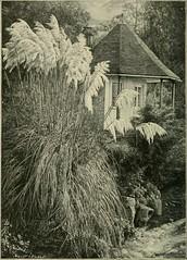 Anglų lietuvių žodynas. Žodis woodsia glabella reiškia Laukinės glabelės lietuviškai.
