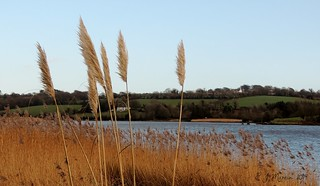 Down by the Slaney in Killurin Co Wexford Jan 2014