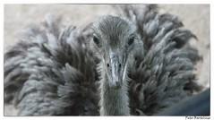 emoe (Peter Bartelings AKA PeBee) Tags: nature netherlands amsterdam birds vogels zeeland natures