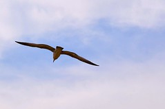 image (Eva O'Brien) Tags: park seagulls lake chicago bird beach nature birds nikon seagull lakemichigan northside montroseharbor lakefront montrosebeach d3100 nikond3100 evacares evaobrien