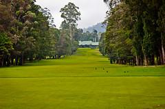 DD.CAP.2014.07.26.000011 (Dilan Damith Prasanga's) Tags: club golf nuwaraeliya golfground nuwaraeliyagolfground