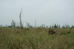DSC06386 (Ton Smilde) Tags: oostvaardersplassen naturereserveinthenetherlands