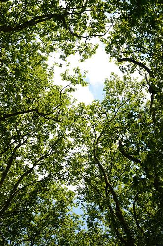 Break In The Trees