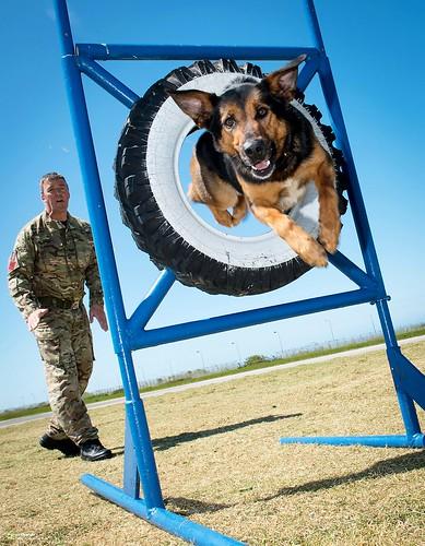 RAF Police Dog Training