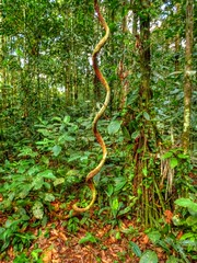 Helix (Ecuador Megadiverso) Tags: spiral ecuador amazon rainforest helix hdr yasuni yasuninationalpark