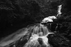 Irupu Waterfalls (Ravikanth K) Tags: longexposure trees water monochrome forest river mono long exposure tourist falls southern waterfalls karnataka range wayanad virajpet nilgiris kodagu lakshmana cauvery irpu brahmagiri tirtha iruppu irupu