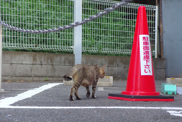 Today's Cat@2014-09-13