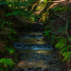 little falls (albryx) Tags: nature water stone creek waterfall wasser wasserfall natur bach grn blau stein