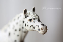 toy horse portrait 10 - knabstrupper (photos4dreams) Tags: horses horse toy photo photos plastic pferde pferd spielzeug stallion einhorn apaloosa filly plastik hengst schleich friese stute photos4dreams photos4dreamz p4d horsesbyschleichp4d horsesp4d