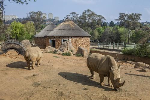 Thumbnail from Johannesburg Zoo