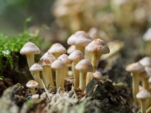Forest of tiny toadstools by James E. Petts, on Flickr