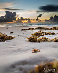 Seaweed (Anics) Tags: ocean seaweed beach clouds sunrise landscape sand daytonabeach