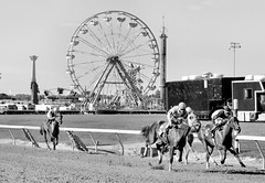"2016-08-28 (69) r9 the field trails far back in the final stretch (JimFleenor) Tags: photos photography maryland md marylandracing timonium statefair jockey جُوكِي ""赛马骑师"" jinete ""競馬騎手"" dżokej jocheu คนขี่ม้าแข่ง jóquei žokej kilparatsastaja rennreiter fantino ""경마 기수"" жокей jokey người horses thoroughbreds equine equestrian cheval cavalo cavallo cavall caballo pferd paard perd hevonen hest hestur cal kon konj beygir capall ceffyl cuddy yarraman faras alogo soos kuda uma pfeerd koin حصان кон 马 häst άλογο סוס घोड़ा 馬 koń лошадь outside outdoors ferriswheel rides rider bw blackwhitew blackandwhite monochrome"