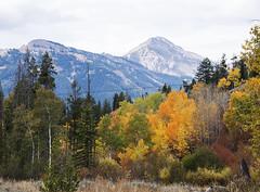 Moose/Wilson Road (Bonnie Bowne) Tags: grandteton tetons wyoming landscape fall