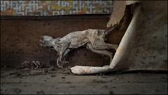 Deceased (ducatidave60) Tags: fuji fujifilm fujixt1 fujinonxf23mmf14 abandoned decay dereliction