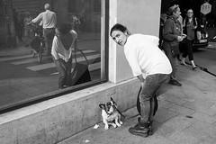 Croisements (amor du 94) Tags: animaux danslarue femme humour lemarais lieu pariscentre passants reflet sujet texture verre ruepave paris 4me dcalage scne srie street