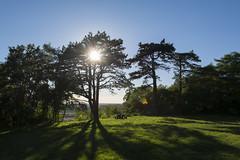 Relax (Jan van der Wolf) Tags: map162498v shadow schaduw light licht tree boom sun zon bench backlight tegenlicht wife vrouwe relax serene flare lensflare landscape landschap