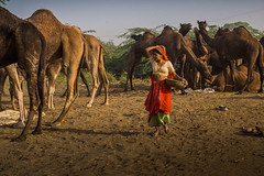 L1002970.jpg (Bharat Valia) Tags: pushkarfair bharatvalia desert bharatvaliagmailcom pushkarmela pushkarimages festivalsofindia pushkar camel pushkarcamelfair sheperd rajasthanportraits