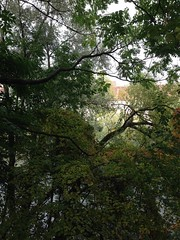 October 15, 2016 15:01:18 (Natascha W) Tags: autumn fall fallfoliage fallcolors autumncolors leaves trees tree bume baum bltter herbst herbstfarben natur nature graz mur murufer riverbank afternoon nachmittag ste branches