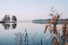 293/366 (Niko Saarinen) Tags: jrvenp autumn fall syys syksy morning frost fujifilm xe2 fujinon35mm classicchrome lake tuusula tuusulanjrvi visitfinland nature reflection
