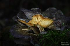 Außenbeleuchtung (Erwin Lorenzen) Tags: pilz mushroom natur licht canoneos5dmarkii elo nature makro makrofotografie wald pflanzen pilze baumstamm
