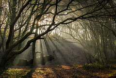 The Beast Of The Valley (Rob Pitt) Tags: rivacrevalley rivacre ellesmereport little sutton light beams early morning sunrise winter trees branches rob pitt photography silhouette cheshire