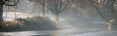 Defrosting (femmaryann) Tags: sunbeams nature frost defrost trees water lakebirds flightoutdoors haze
