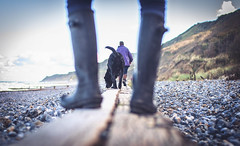 Big walk. (Matt_Briston) Tags: dog walk purple overstrand cromer norfolk wet legs beach sand sea stick swim ball nikon d90 matt cooper
