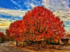 Autumn's Turn (Pejasar) Tags: autumn fallcolors orange tulsa oklahoma season art