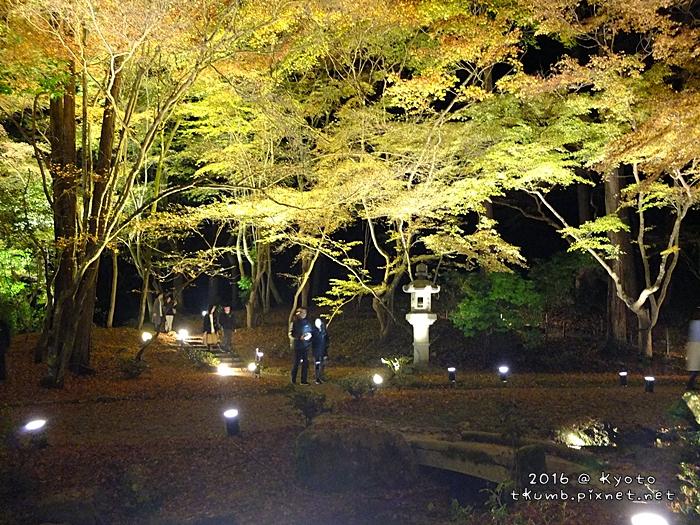 2016醍醐寺夜楓9.JPG