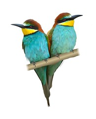 At last, the Bee Eater has a Friend... (Laura's Aura) Tags: bee eater bird birds africa art vector artist drawing blue colour