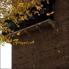 Falling leaves... (mau_tweety) Tags: autumn autunno italia italy verona veneto leaves foglie yellow giallo tree albero