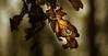 Autumn Leaf. (Sylvie.) Tags: leaf leaves autumn fall november sylviepeeters sony sonyilce6000 90mm fe90mmf28macrogoss dof depthoffield bokeh light yellow hoboken hobokensepolder antwerpen antwerp anvers belgium beautiful macro explore