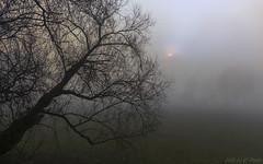Fog trees - I (KF-Photo) Tags: farbübergänge fog kirchentellinsfurt nebel nebelstimmung neckartal sonnenscheibe lichthof