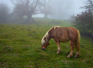 Horse in landscape with fog.