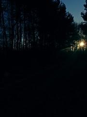 Stellar (Bricheno) Tags: forest sun bricheno ayrshire scotland escocia reflections schottland écosse scozia escòcia szkocja scoția 蘇格蘭 स्कॉटलैंड σκωτία kilwinning irvine