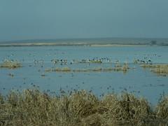 Laguna de la Nava_2 (corbetapalentino) Tags: laguna de la nava