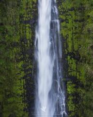 Plummet (santosh_shanmuga) Tags: akaka falls single drop tallest highest water waterfall fall landscape plummet nature outdoor outdoors wild forest green vista beautiful nikon d810 80200mm hi hawaii big island bigisland kona